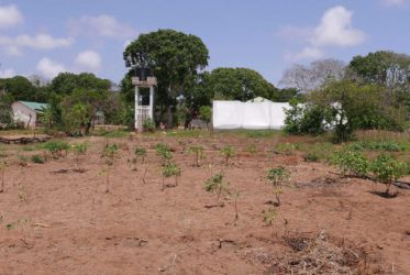 Agricultural Projects
